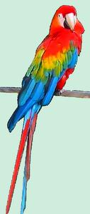 perroquet10.png