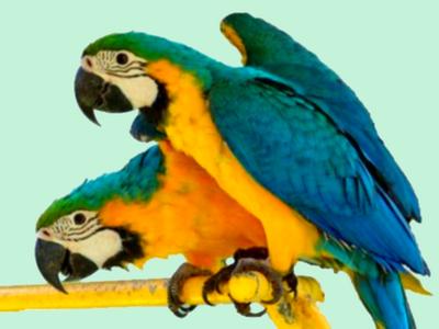 perroquet3.png