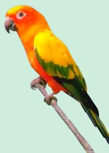 perroquet6.png